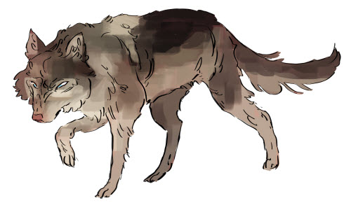 Zane in Wolf Form